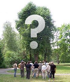 Entscheidungshilfen zum Thema Bäume