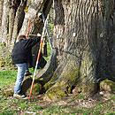 Baum- und Bodengutachten