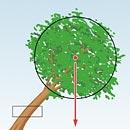 Schrägstehende Bäume