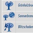 Checkliste Baumkontrolle