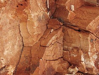 Braunfäule  Holzversprödung