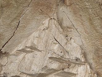 Simultane Weißfäule Holzversprödung, Holzerweichung