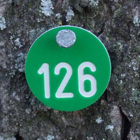 runde Markierungsplakette für Bäume