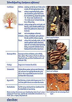 Fit for Fungi für draußen Beispielseite 1