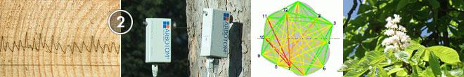 Baum- und Bodenseminar Jena 2019 Bohrwiderstandsmessung mit IML-Resi Impulsthomografie
