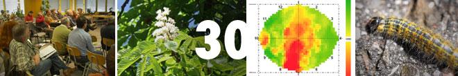 Baum- und Bodenseminar Jena 2020 Schalltomographie Zustandserhebung an Bäumen