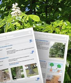 Baum-Check Arbeitsblätter zur Baumuntersuchung nach VTA