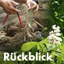 Rückblick Baum- und Bodenseminar Jena 2017, Workshop Jungbäume